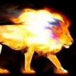 cropped-cropped-Africa-Fire-Lion-Header-Final2.jpg